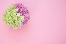 Beautiful Pink And Green Hydrangea Flowers In A Vase On A Pink Background With Free Space For Text