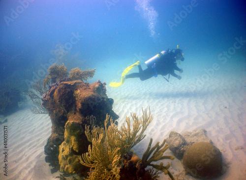 Foto underwater scuba diver , coral reef , caribbena sea , Venezuela