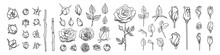Big Set Of Line Roses And Leaves. Rose Bud Illustration. Hand Drawn Flowers. Vector Floral Elements Clipart. Perfect For Decorations Wedding Cards, Greeting Cards, Invitations.