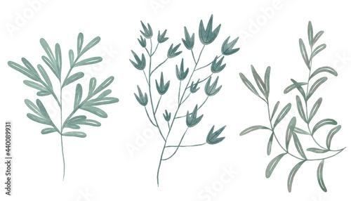 Fotografie, Obraz Set of isolated stylised plants