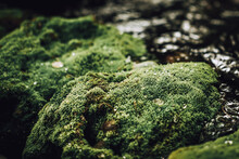 Close-up Of Green Moss On The Rock By The River.