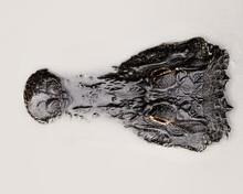 Alligator In Milky Waters