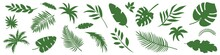 Collection Of Vector Green Leaves. Jungle Exotic Tropical Leaves. Elements For Design