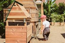 USA, California, Los Angeles. Toddler Boy Looking At Chickens In Urban Backyard Garden.