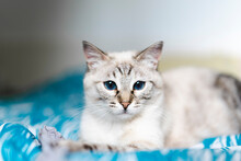 Portrait Of Domestic Cat Looking At Camera