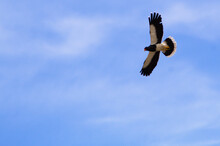 Low Angle Shot Of A Magnificent Eagle Flying High In The Blue Sky