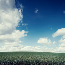 Grain Field Near Wuppertal, Germany