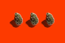 Studio Shot Of Threeconiferous Trees Standing Against Red Background