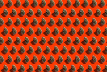 Pattern Of Rows Of Coniferous Trees Standing Against Red Background
