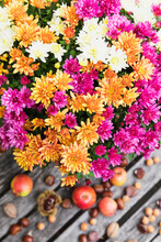Bouquet Of Blooming Chrysanthemums