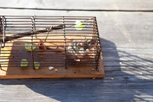 Mouse In Cage During Sunny Day