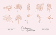 Bundle Of Detailed Botanical Drawings Of Blooming Wild Flowers. Collection Of Hand Drawn Plants With Contour Lines. Elegant Botanical Vector Illustration.