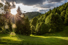 Empty Grass Area With Pine Trees During Sunny Day In Province Of Brescia, Lombardy, Italy