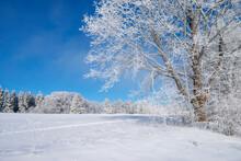 Germany, Baden Wurttemberg, Zollernalb, Winter Landscape With Hoar Frost On Trees Under Blue Sky