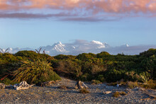 New Zealand, South Island, Fox Glacier, Seaside Vegetation With Snowcapped Mountains In Background
