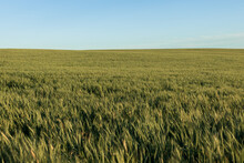 Green Grassy Meadow In Countryside Under Blue Sky