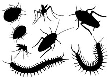 Insect Pests In The Set. Vector Image.;