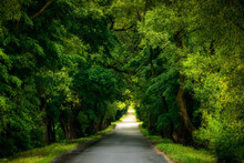Green Dense Deciduous Forest With Lush Foliage And Deserted Asphalt Road