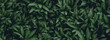 Leinwandbild Motiv tropical leaves, abstract green leaves texture, nature background