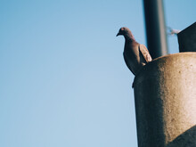 Closeup Shot Of A Pigeon Perching On A Concrete Surface Against A Blurred Background