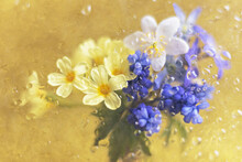 Bouquet Of Yellow, White And Purple Primroses On A Gold Background Behind Glass With Rain Drops
