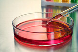Dripping red sample into Petri dish with liquid on table, closeup