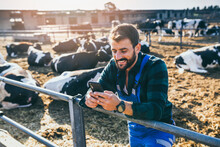 Happy Young Farmer Standing In Fornt Of Cows And Looking At His Phone.