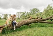 The Mistress Girl Sits And Cuddles With Her Dog Of The Golden Retriever Breed On A Broken Trunk From A Willow Tree