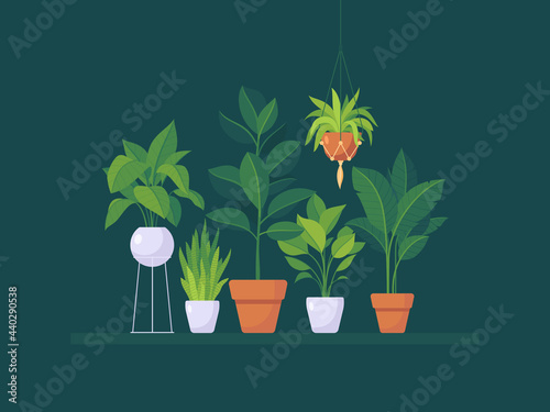Obraz na plátně Set of office and home plants for interior decoration