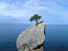 Tree That Fights For Life On A Rock