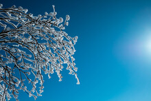 Frozen Branches On Winter Tree With Blue Sky On Background