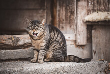 Miauende Katze