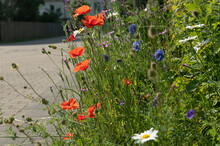 Urban Greening, Nature In Town, Colorful Mixture Of Wild Summer Meadow Flowers On The Roadside In The City: Poppies, Margarites And Cornflowers,