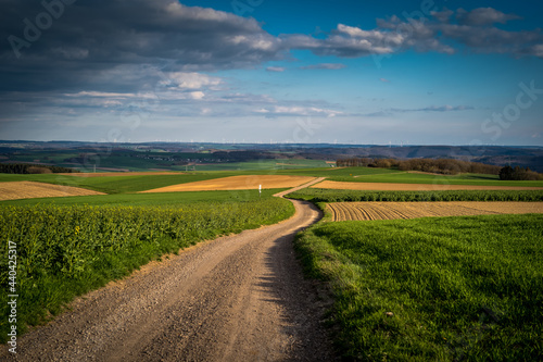 Slika na platnu Scenic view of a vast agricultural field with a long road in the countryside und