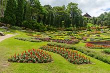 Mae Fah Luang Flower Garden At Doi Tung,Chiang Rai Province, Thailand.