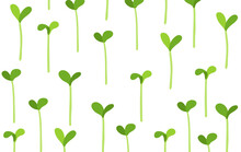 Seedlings Field. Growing Young Plant Shoots. Crops Seed Began To Sprout. Vector Background.