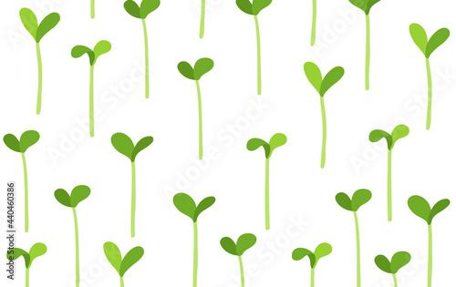 Fotografie, Obraz Seedlings field