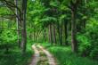Leśna droga pomiędzy drzewami w Kampinoskim Parku Narodowym