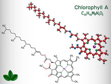 Chlorophyll A, Chlorophyll Molecule. It Is Photosynthetic Pigment Used In Oxygenic Photosynthesis. Structural Chemical Formula And Molecule Model