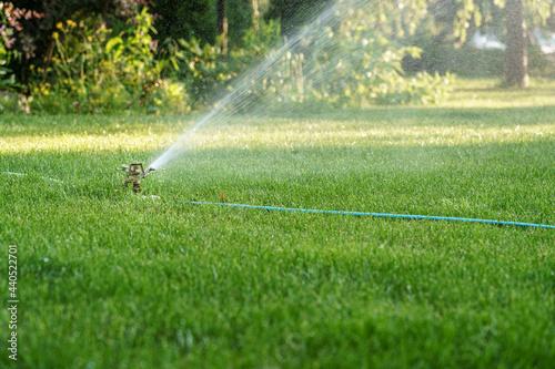 Podlewanie trawnika, nawodnienie zraszaczem rotacyjnym