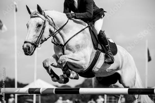 Horse Jumping, Equestrian Sports, Show Jumping themed photo. Fototapeta