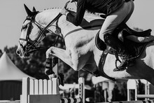 Horse Jumping, Equestrian Sports, Show Jumping Themed Photo.