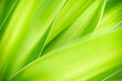 Leinwandbild Motiv Nature of green leaf in garden at summer. Natural green leaves plants using as spring background cover page greenery environment ecology wallpaper