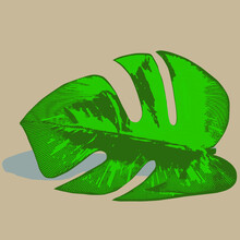 Leaves With Seed Pod Isolated On Cartoon Palm Leaf