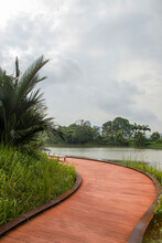 The Rasau Walk In Jurong Lake Gardens. A Meandering Boardwalk Along The Water's Edge, Enables Visitors To Get Up Close With Nature.