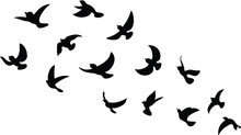 Black Bird Silhouette Against White Background No Sky. Birds From Different Parts Of World. Common Birds. Bird Icon Vector Illustrations Isolated Doodle.