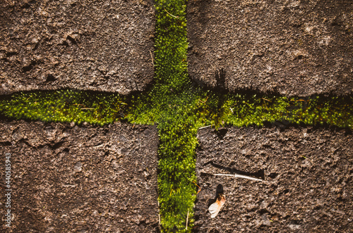 Green moss Fototapete