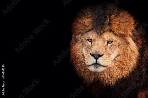 Foto Lion portrait detail
