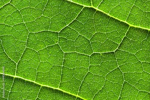 Tela Macro, gros plan de texture des veines d'une feuille verte