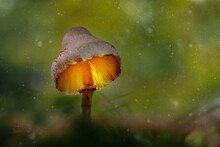 Mushroom Glowing In The Forest